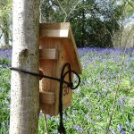 Dormouse box and bluebells at Dunnage by Henry Johnson SQUARE
