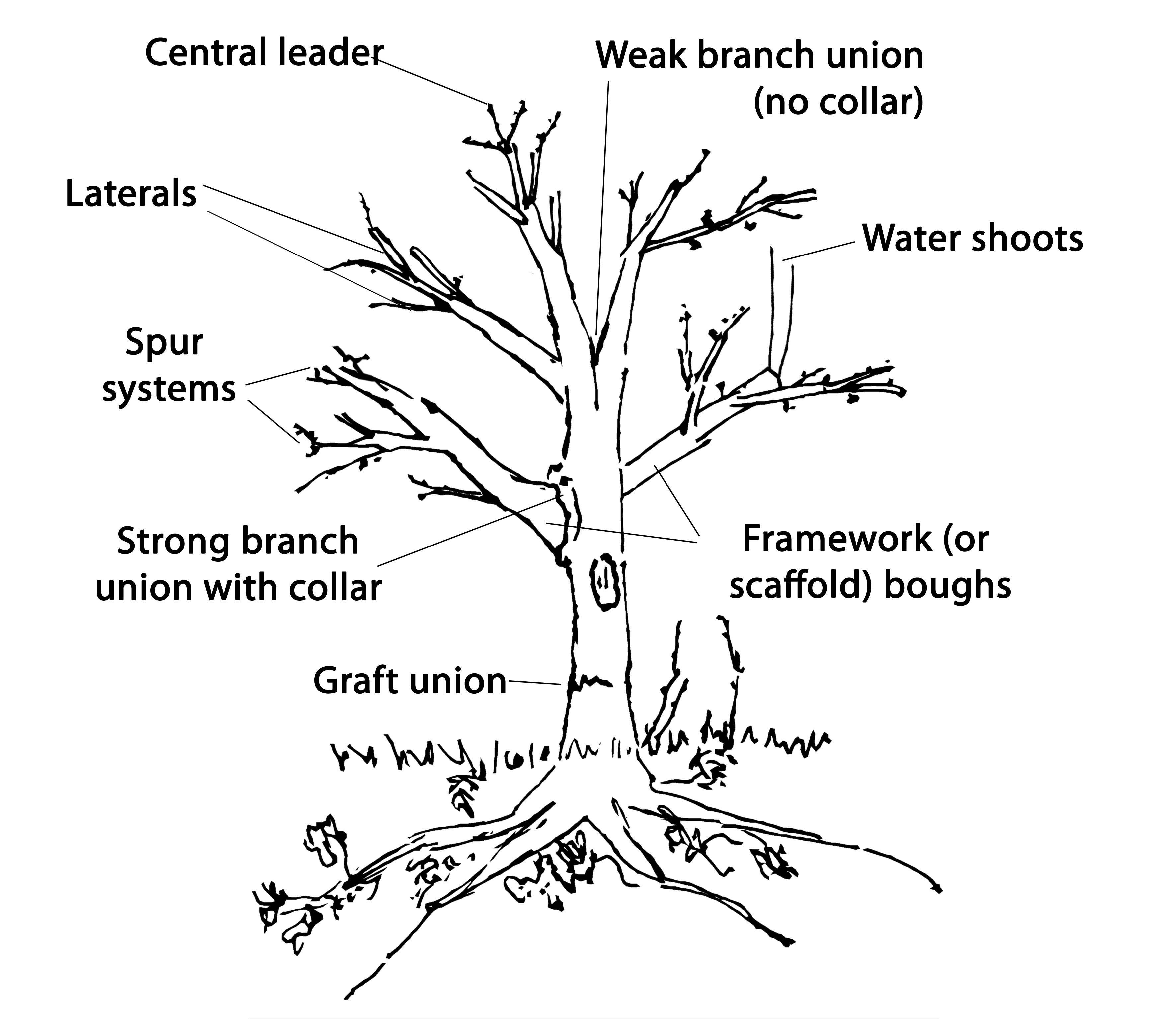 Tree diagram cutout reduced peoples trust for endangered species tree diagram cutout reduced ccuart Images