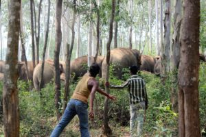 The reliatory attitude of human towards elephant herd by DD Bangla News