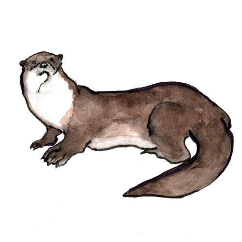 Vanessa Wembridge Otter Illustration